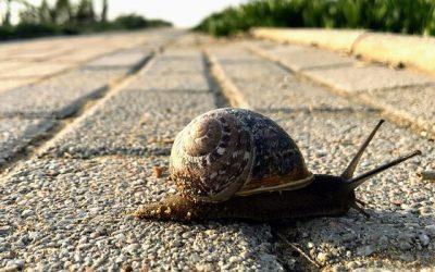 Slow devant !